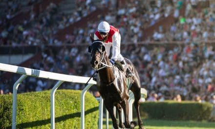 Godolphin Hero Blue Point Retired to Stud