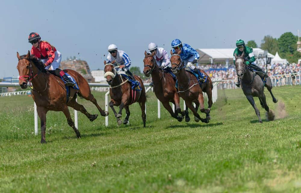 Gambles Taking Hold in Northumberland Plate Betting